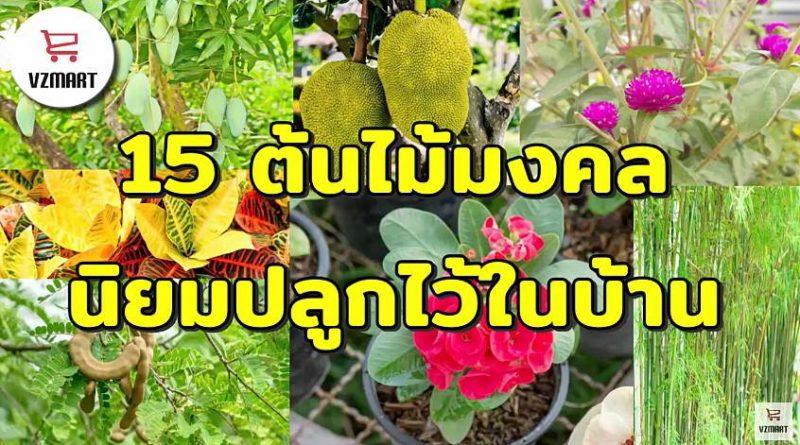 15ต้นไม้มงคลนิยมปลูกไว้ในบ้าน