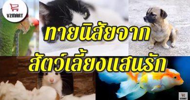 ทายนิสัยจากสัตว์เลี้ยงแสนรัก